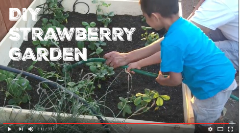diy strawberry garden